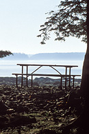 The Seawall Picnic Area has tables right next to the ocean with views of Great Cranberry Island.