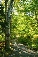 This shows one of the many paths through the Wild Gardens of Acadia.